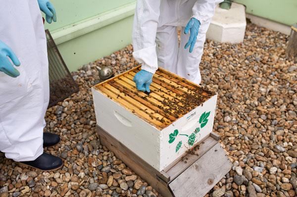 Beekeepers - Beehive BetaTec