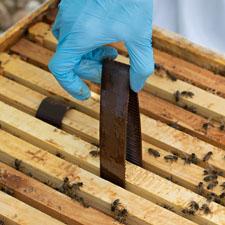 HopGuard Strips Bees
