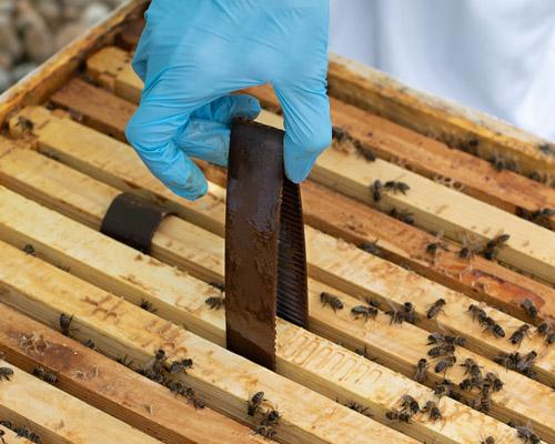 Hopguard Strips - Bees