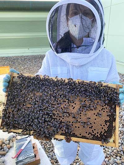 BetaTec Bees - Natural Varroa Mite Control