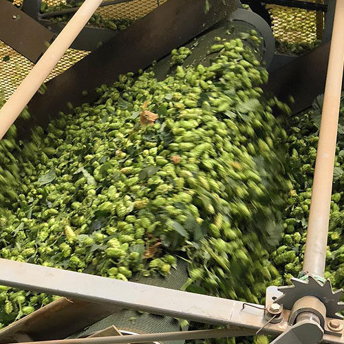 Hops Processing